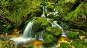 WB-waterfallmoss